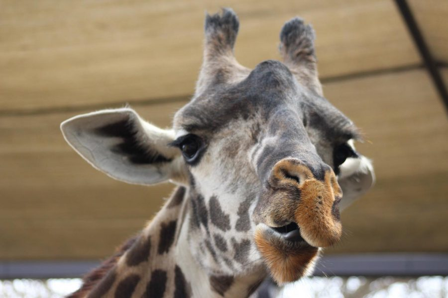 Newspaper+Zoo+Photo+Safari+February+2018